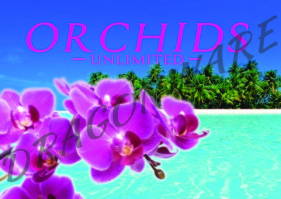 Orchids Unlimited Front beach