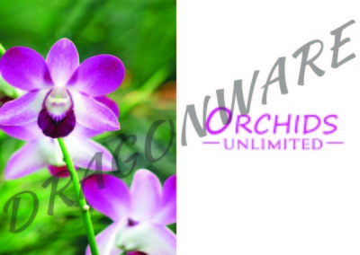Orchids Unlimited half card Front