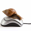 Snail pc